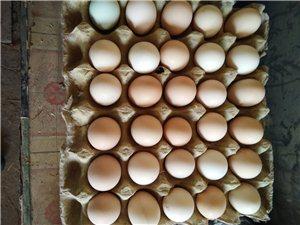 出售笨雞蛋