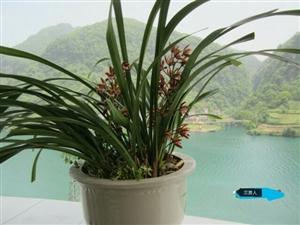 长阳桂花园交通宿舍4室2厅2卫99万元