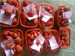 农夫草莓园