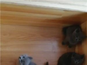 筱成宠物 各种名猫 名狗