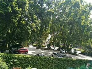 门前带80平米独立花园,国际新城,精装急售!