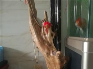 天然崖柏树抱石两个,自然造型没经过加工,天然香味,稀有纹理