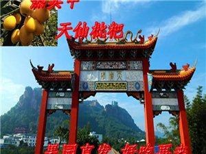 四川泸州天仙枇杷热销包邮当季新鲜枇杷现摘现发