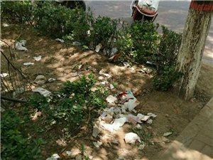 崇文小公园的路边草丛里都是垃圾