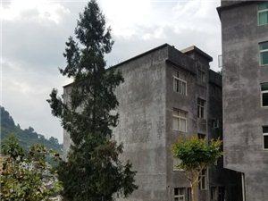城西石峡栋房急售4室2厅2卫168万元