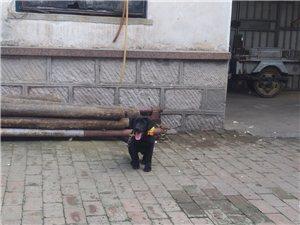 求购大狗笼子一个,因为放室外,那种笨重抗造的最好,