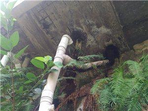 二中大门对面厕所排污管直达桂溪河