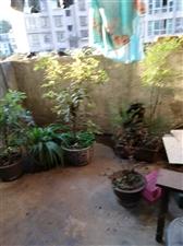阳光花园3室2厅1卫14800元/月