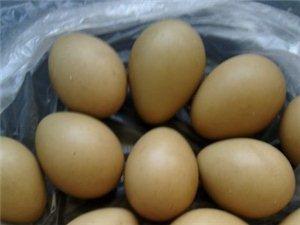 出售野鸡蛋