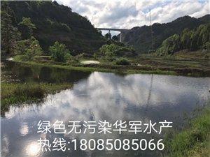 綠色無污染華軍水產