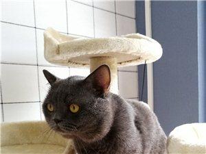 龙南 OM 猫舍