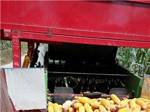 径穗兼收玉米收