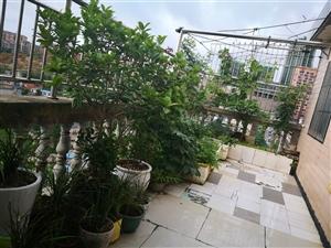 开阳县紫江花园老干区3室1厅1厨一卫