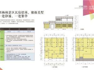 中國金塔胡楊林面向社會招商公告