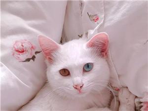 想养只猫咪