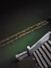 东湖快变垃圾湖了