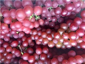 紅玫瑰葡萄出售