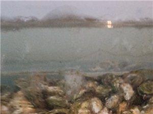 平泉最親民的海鮮 新星海鮮水產