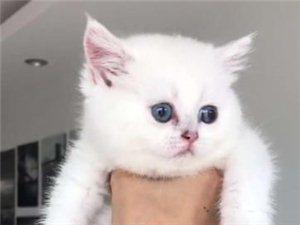 黔江呼噜猫舍