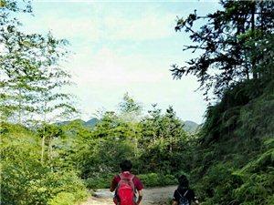 徒步棉湖林场