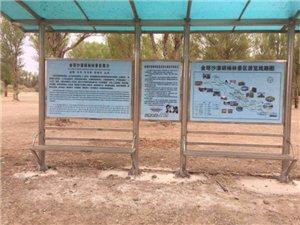 中国金塔沙漠胡杨林