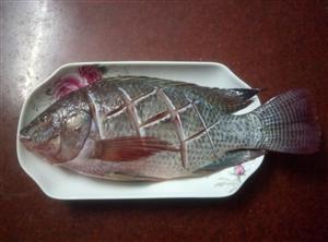 我爱罗非鱼