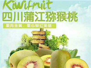 蒲江猕猴桃,代理招商