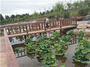 公园池塘抓鱼算偷吗?