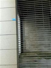 康安江城售房处旁边出租2室3000元/月可议