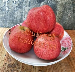 我们家的苹果核桃成熟啦!