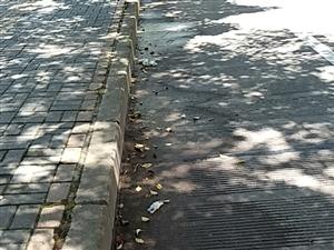 霍邱 临水镇开发新街,临水中学旁有三间宅基地出售或出租
