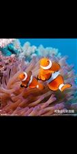 莱阳有没有养海水鱼的鱼友 组个群吧
