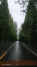 雨,其实是一种心情。微雨霏霏,是清新是自然是感动,那凉意,是一种温暖也是一种思念;大雨倾