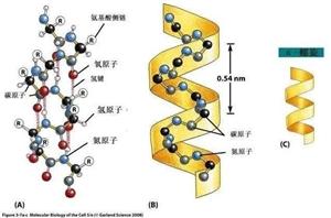 为什么人类是以碳元素为基础,而不是以硅元素为基础?