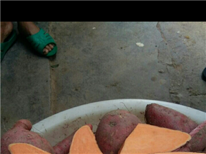 家种的红薯,有需要者请联系