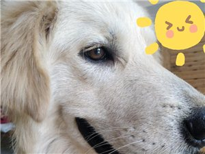 朋友家的狗狗喜歡的來
