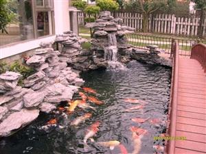 鱼池鱼缸制作,水过滤系统专业定制!水质专业咨询!