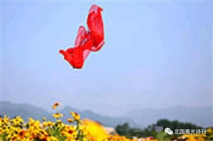 飘飞的红丝巾文/冬日的阳光