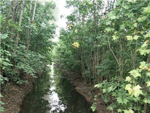 【已回复】曾经是村民赖以生存的河,如今成了排污的污水河