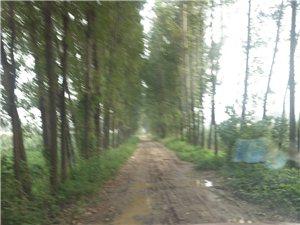 都来看看和兴乡孙庄村牛州的路