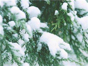 我若是一片雪花文/冬日的阳光
