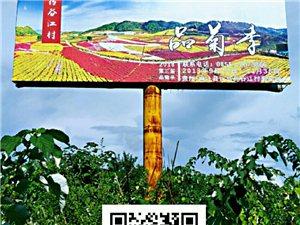 药谷江村菊花园-第三届品菊季于9月22日正式开园。网上订票,扫码入园,便捷,实惠多!