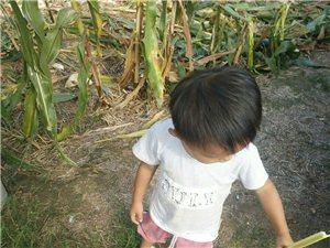 玉米杆(童年回忆)