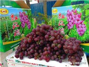 出售��山寨�t玫瑰葡萄。�系��15259056279