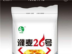 小麦早熟抗病高产品种天宁38红小麦和濮麦26半角质白麦,不信你先种几亩!
