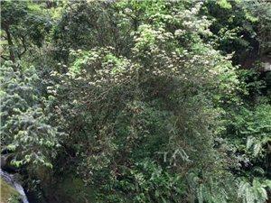 天堂坝原始森林游记