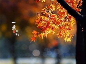 秋的色彩……