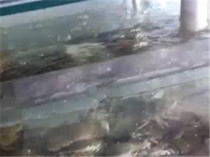 新星海鲜水产批发