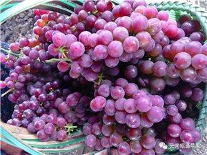出售��山寨�t玫瑰葡萄。�系��13638827448