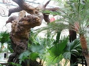 《见山生态酒店》庆贺教师节,推出八折优惠活动。